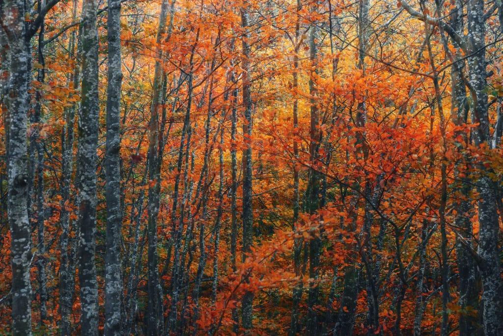 Autumn's Jungle