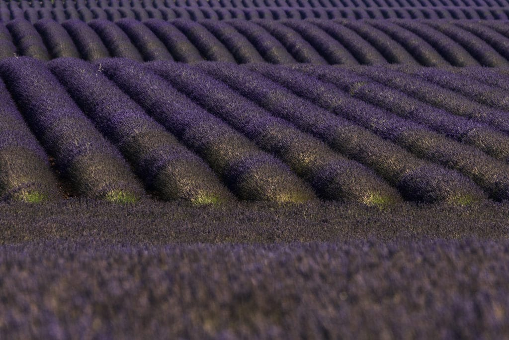Lavender Geometries